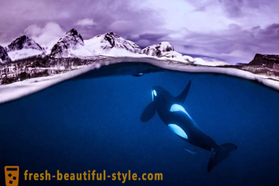 Incredible footage of underwater photography contest winners