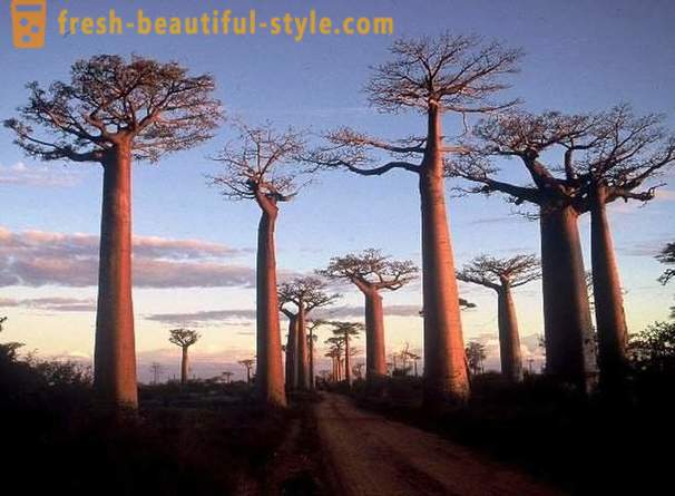 Interesting facts about Madagascar that you might not know