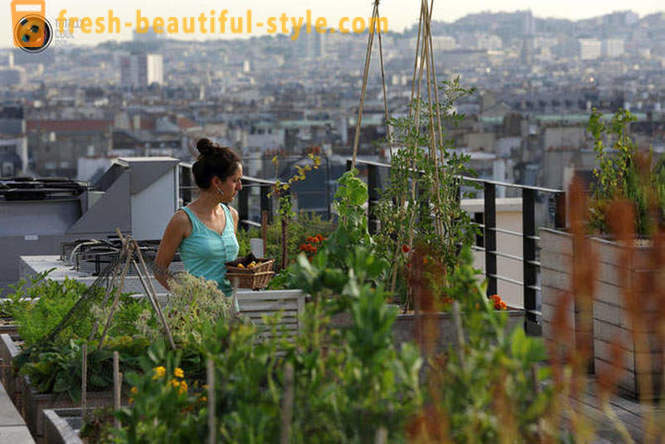 Beautiful gardens on the roofs of houses