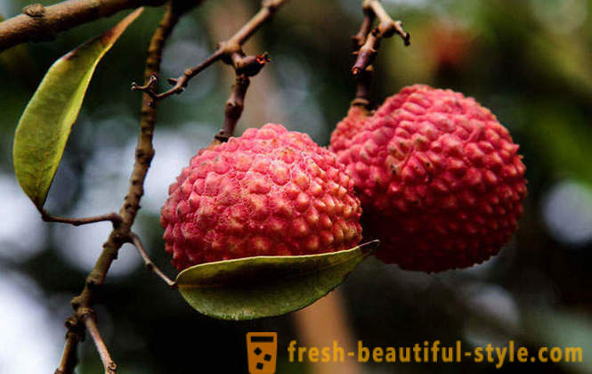Guide to Exotic Fruits