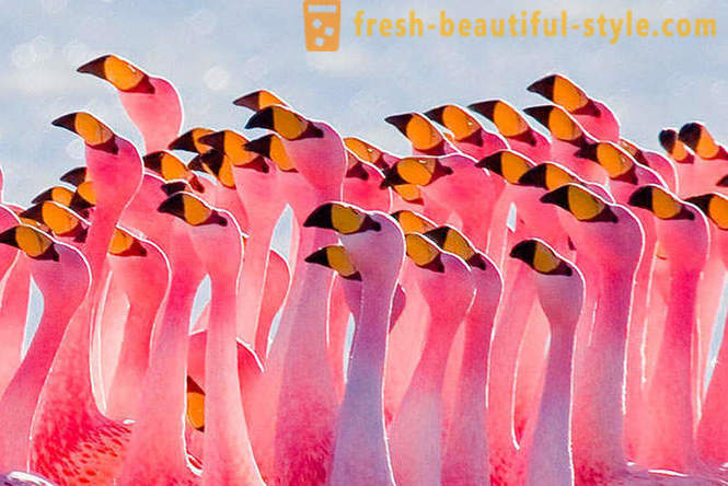 Country of pink flamingos